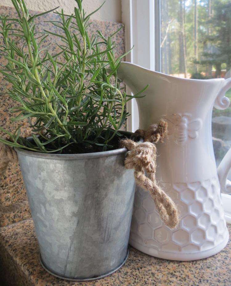 Rosemary Planter